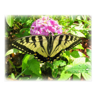 Swallowtail Beauty Postcard