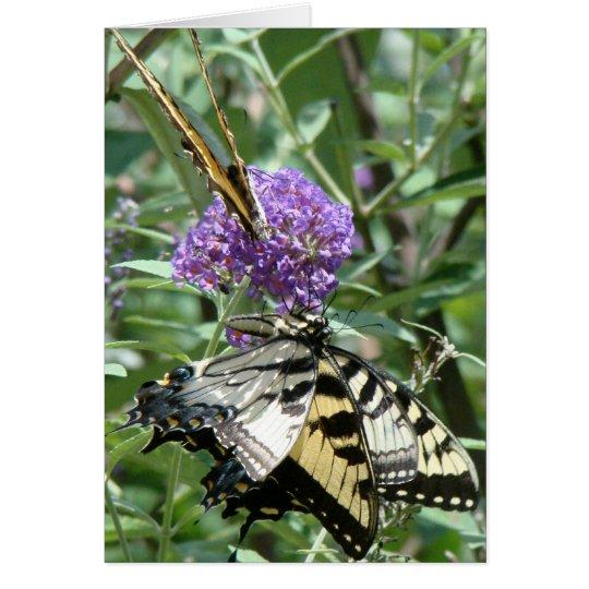 Swallowtail Butterflies Card