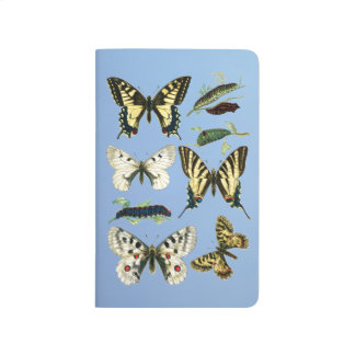 Swallowtail Butterflies, Caterpillars and Moths Journal