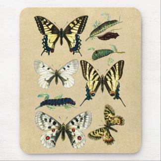 Swallowtail Butterflies, Caterpillars and Moths Mouse Pad