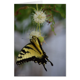 Swallowtail Butterfly 1 Notecard