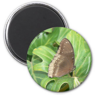 Swallowtail butterfly 2 inch round magnet