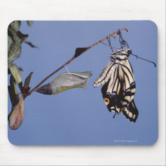 Swallowtail butterfly after metamorphosis mouse pad