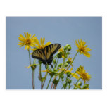 Swallowtail Butterfly against a Beautiful Blue Sky Postcard