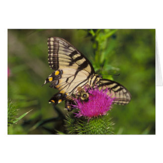 Swallowtail Butterfly and Bee on a Flower. Greeting Card