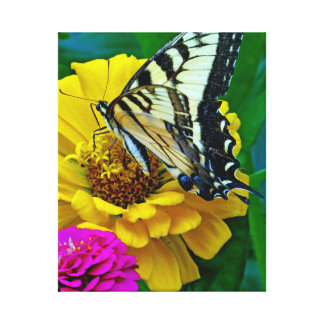 Swallowtail Butterfly And Colorful Zinnias Gallery Wrap Canvas