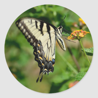 Swallowtail Butterfly Classic Round Sticker