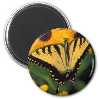 Swallowtail Butterfly Decorative Refrige Magnets