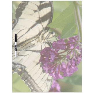 Swallowtail Butterfly Dry Erase Board