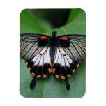 Swallowtail Butterfly Flexible Magnet Rectangular Magnets