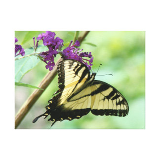 Swallowtail Butterfly Flowers Floral Wildlife Canvas Print