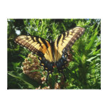 Swallowtail Butterfly Gallery Wrapped Canvas