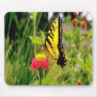 Swallowtail-butterfly having lunch on a mousepad