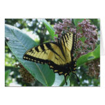 Swallowtail Butterfly I on Milkweed at Shenandoah Card