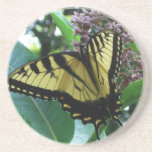 Swallowtail Butterfly I on Milkweed at Shenandoah Coaster