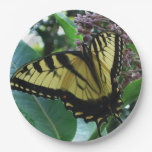 Swallowtail Butterfly I on Milkweed at Shenandoah Paper Plate