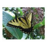 Swallowtail Butterfly I on Milkweed at Shenandoah Postcard