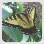 Swallowtail Butterfly I on Milkweed at Shenandoah Square Sticker