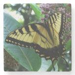 Swallowtail Butterfly I on Milkweed at Shenandoah Stone Coaster