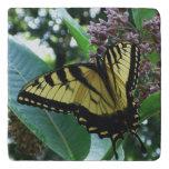 Swallowtail Butterfly I on Milkweed at Shenandoah Trivet