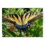 Swallowtail Butterfly II at Shenandoah Card