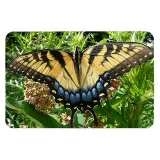 Swallowtail Butterfly II at Shenandoah Magnet