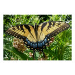 Swallowtail Butterfly II at Shenandoah Poster