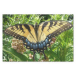 Swallowtail Butterfly II at Shenandoah Tissue Paper