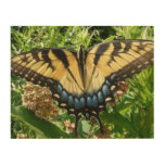 Swallowtail Butterfly II Colorful Photography Wood Wall Art