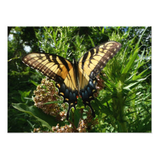 Swallowtail Butterfly III Beautiful Colorful Photo