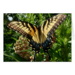 Swallowtail Butterfly III Beautiful Colorful Photo Card
