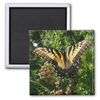 Swallowtail Butterfly III Beautiful Colorful Photo Magnet