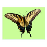 Swallowtail Butterfly III Beautiful Colorful Photo Postcard