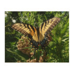 Swallowtail Butterfly III Beautiful Colorful Photo Wood Print