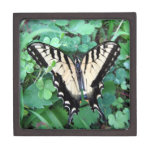 Swallowtail Butterfly in Clover Premium Gift Boxes