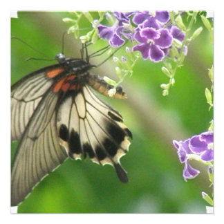 Swallowtail Butterfly Invitations