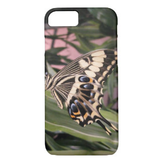 Swallowtail Butterfly iPhone 7 Case