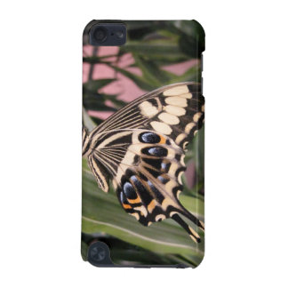 Swallowtail Butterfly iPod Touch (5th Generation) Case