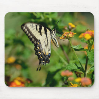 Swallowtail Butterfly Mouse Pad