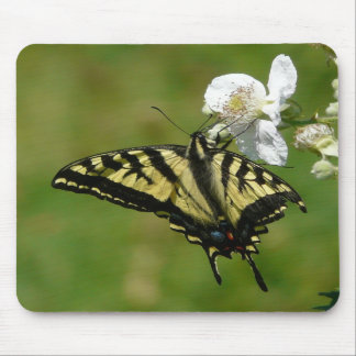 SwallowTail Butterfly on a Blackberry Blossom Mousepads