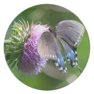 Swallowtail Butterfly On A Thistle Plate