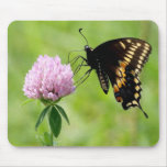 Swallowtail Butterfly on Clover Mousepad