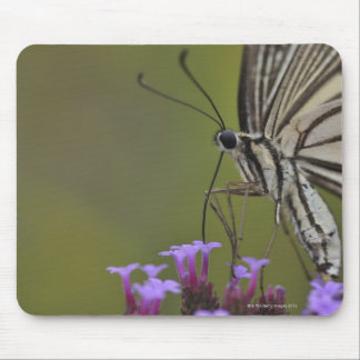 Swallowtail Butterfly on flower, Chiba Mouse Pad