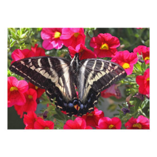Swallowtail Butterfly on Flowers Announcements