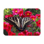 Swallowtail Butterfly on Flowers Magnets