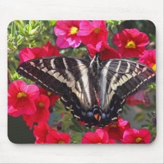 Swallowtail Butterfly on Flowers Mouse Pads