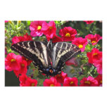 Swallowtail Butterfly on Flowers Photo Print