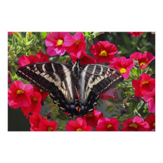 Swallowtail Butterfly on Flowers Posters