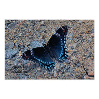 Swallowtail Butterfly on Gravel Road Poster