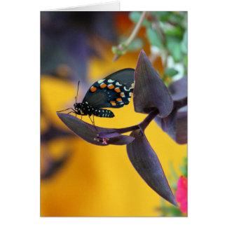 Swallowtail Butterfly on purple bloom Card